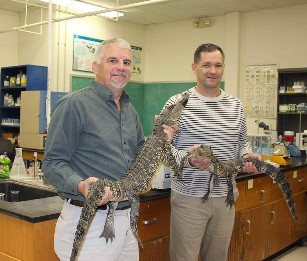 McNeese State University's Dr. Mark Merchant, professor of chemistry, left, and Dr. Chip LeMieux, dean of the College of Agricultural Sciences, have collaborated on a research project that has been awarded the university's second patent for an alligator blood feed supplement for pigs and poultry that could potentially replace traditional antibiotics that may contribute to resistance in humans and the environment.
