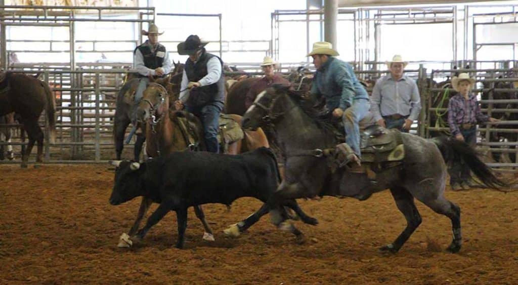Two rodeo members work to capture an animal