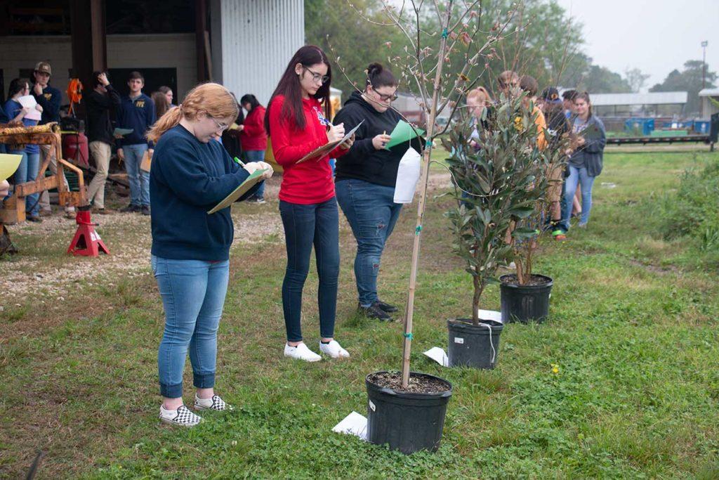 Students identify plant species