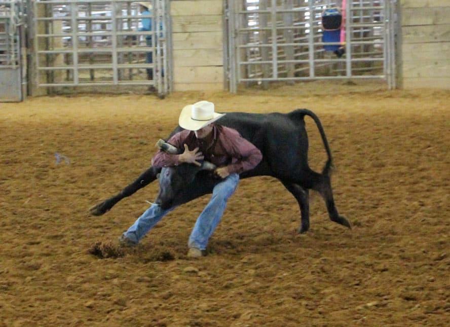McNeese student wrestles steer